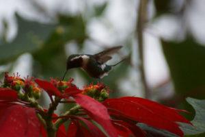 aves-del-norte-1