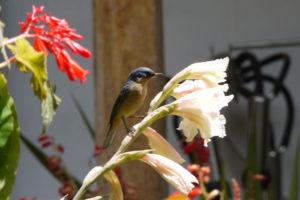 aves-del-norte-5